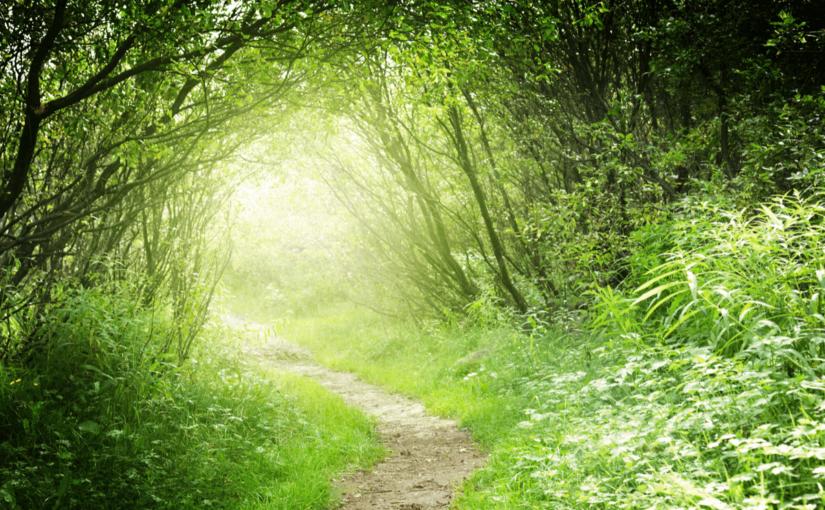森林に癒されよう!話題の森林セラピーに出かけよう!